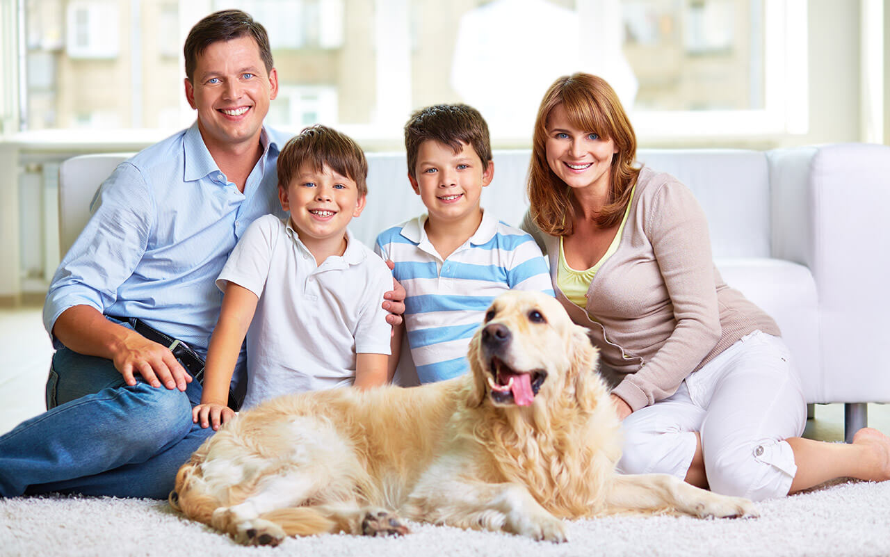 Making Your Time Worth-having with Your Pet at Home